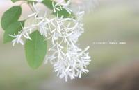 岡湊神社は花盛り - 花々の記憶