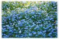 ◆季節は春から初夏へ?ピンクから憧れのブルーの季節(〃・ω・) - ☆彡ちいさな幸せ☆彡別館
