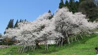 2017年 飛騨高山 臥龍桜 - 月が昇れば