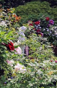 2017・庭の牡丹② - 元木はるみのバラとハーブのある暮らし・Salon de Roses