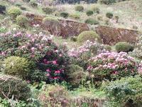 花 - 地産地消で沸かし湯の宿