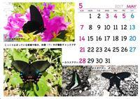5月のカレンダー 2017 - 三鷹の狸のてふてふ交遊録