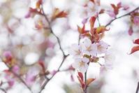 5月1日 今日の写真 - ainosatoブログ02