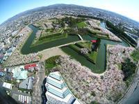 五稜郭タワーから桜満開の五稜郭公園と、ぬい撮り♪ - Smiling * Photo & Handmade 2