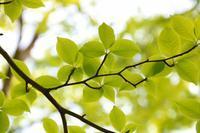新緑の頃のデジブックを公開しました。 - 写真撮り隊の今日の一枚2