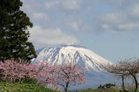 【よりみち編】桃の花と岩手山 - 長岡・夢いっぱい公園
