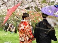 咲楽便り 3 2017Final - フォト・フレーム  - 四季折々 -