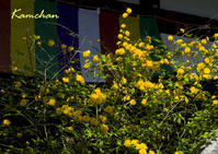 黄色い奈良 - カンちゃんの写真いろいろ