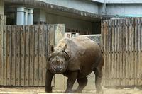 帰りたいけどまだ早い - 動物園放浪記