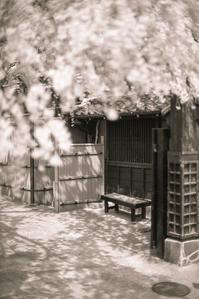 桜の下でだんごをほおばる透明人間 - Film&Gasoline