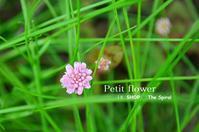"""Petit flower in SHOP ◆ The Spiral...5/2tue"" - SHOP ◆ The Spiralという館~カフェとインポート雑貨のある次世代型セレクトショップ~"
