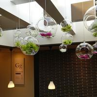 hanging glass with stylish flower yufuin milch cafe - クリエイティブlife