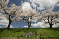 1143 今日の桜 - 四季彩空間遠野