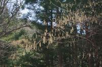 芦川町の春(山梨県笛吹市) - 山の花、町の花