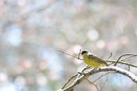 有珠善光寺 - Bird-Watching Journal