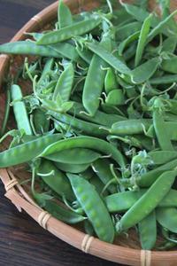 お豆祭り始まりましたっ - ぬるぅい畑生活