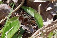 チャマの里再訪 - 蝶と蜻蛉の撮影日記