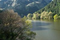 室生湖の桜 2 - toshi の ならはまほろば