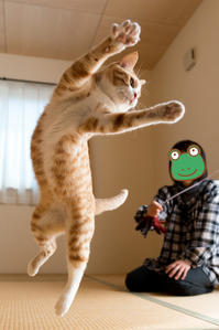 トラちゃん! - 猫と夕焼け