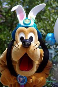 [写真のみ]うさたま大脱走 - Ruff!Ruff!! -Pluto☆Love-