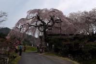思い出の桜☆彡 - DAIGOの記憶