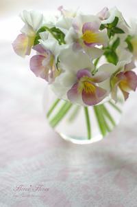 ビオラ - Flores*Flores