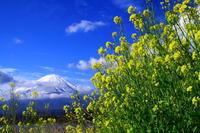 29年4月の富士(37) 大石公園からの富士  - 富士への散歩道 ~撮影記~