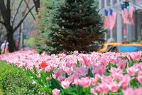 赤いドレスのPark Avenue - Triangle NY