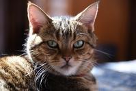 No Cat No Life - ちょっとネコばか