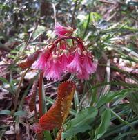 山に咲く花たち(庄田) - 柚の森の仲間たち