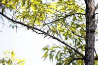 MFの森でコサメビタキに出会う - 私の鳥撮り散歩