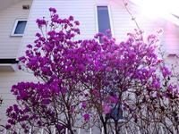 我が家に春が - ゆうゆうタイム