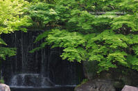 姫路&小豆島の旅  好古園編 - 気ままなたわし