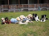 17年5月3日 我が家のゴールデンウィーク突入! - 旅行犬 さくら 桃子 あんず 日記