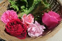 バラ美しき野菜畑 - ペルージャ イタリア語・日本語教師 なおこのブログ - Fotoblog da Perugia