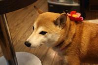 七草がゆとふくちゃんお正月の装い 〜わくちゃんのお店〜 - 日々ニコニコ
