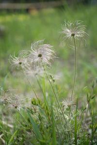 変幻自在な植物たち - この道は風なり