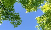 青葉緑葉もぞもぞ - 「美は観る者の眼の中にある」