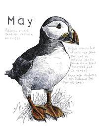 5月 パフィンら海鳥たちの子育ての季節 - ブルーベルの森-ブログ-英国カントリーサイドのライフスタイルをつたえる