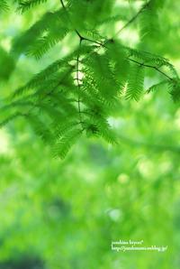 緑まぶしく - jumhina biyori*