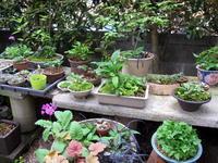 ゴールデンウィークの楽しみ♪ - リリ子の一坪ガーデン