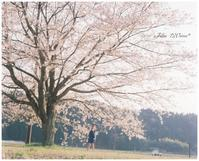 SAKURA*のキオク - ココロハレ*