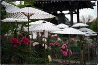 牡丹の寺-2 - Hare's Photolog