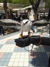 京都の水道を巡って歩く その一 - 大阪ダメダメ団 副団長のブログ