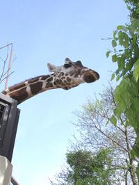 京都市動物園 - NEWS