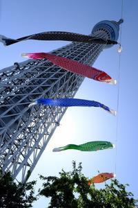 鯉のぼり - PhotoWalker*