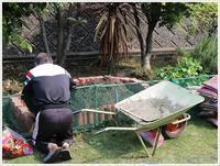 パパさんの力作、新しい花壇の完成です!!お疲れ様~ - さくらおばちゃんの趣味悠遊