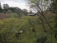 新緑の美しい東福寺へ - ニューヨークで働く&子育て