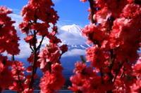 29年4月の富士(38) 大石公園からの富士2  - 富士への散歩道 ~撮影記~