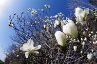5月3日 今日の写真 - ainosatoブログ02